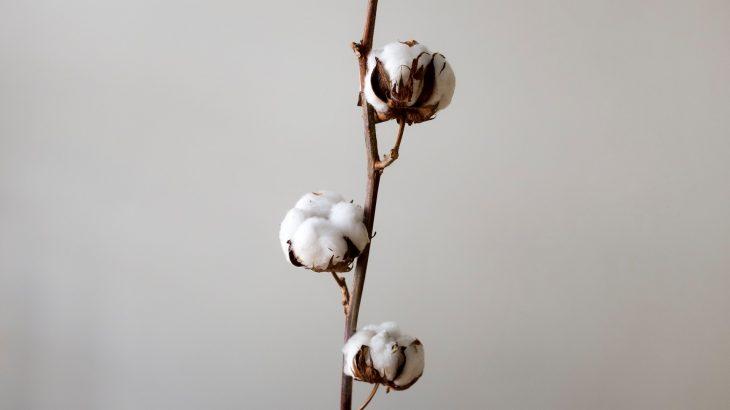 【素材の知識】綿のメリット、デメリットってなに?素材の特徴と接客おすすめトーク